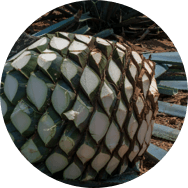 los arango tequila blue weber agave pina